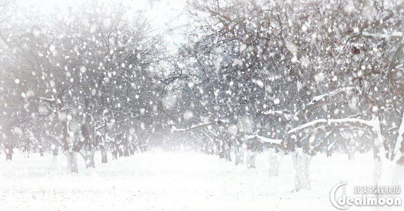 暴雪天气生存手册