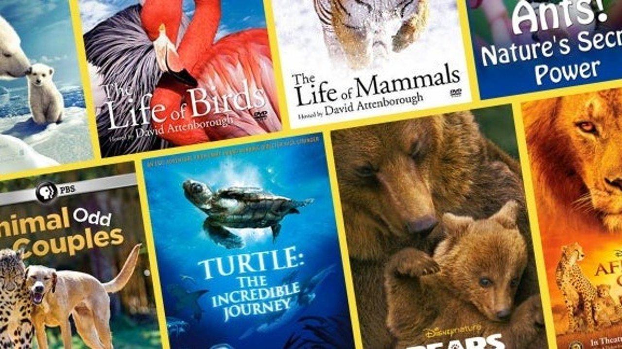 假期值得陪孩子看的高分纪录片 我们的动物邻居/小小世界/我们的星球/企鹅群里有特务/植物王国,边看边学长知识!