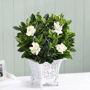 7.5折 封面$261-800-Flowers 官网鲜花无接触速递,为远方朋友送去关怀