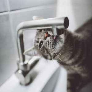 Up to 40% OffPetco Cat Fountains and Water Filters on Sale