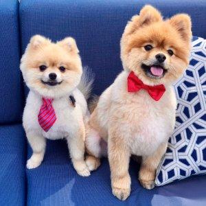 带着你家的小狗一起来交新朋友吧Petco 每周六、周日下午1点 免费小狗狗交友活动