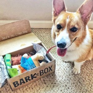Free Extra BarkboxWith Purchase of Barkbox 6 or 12 Month Subscription @ Barkbox