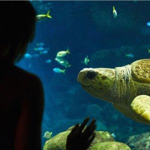 买一送一黑五价:SeaWorld 加州圣地亚哥海洋世界门票黑五大促