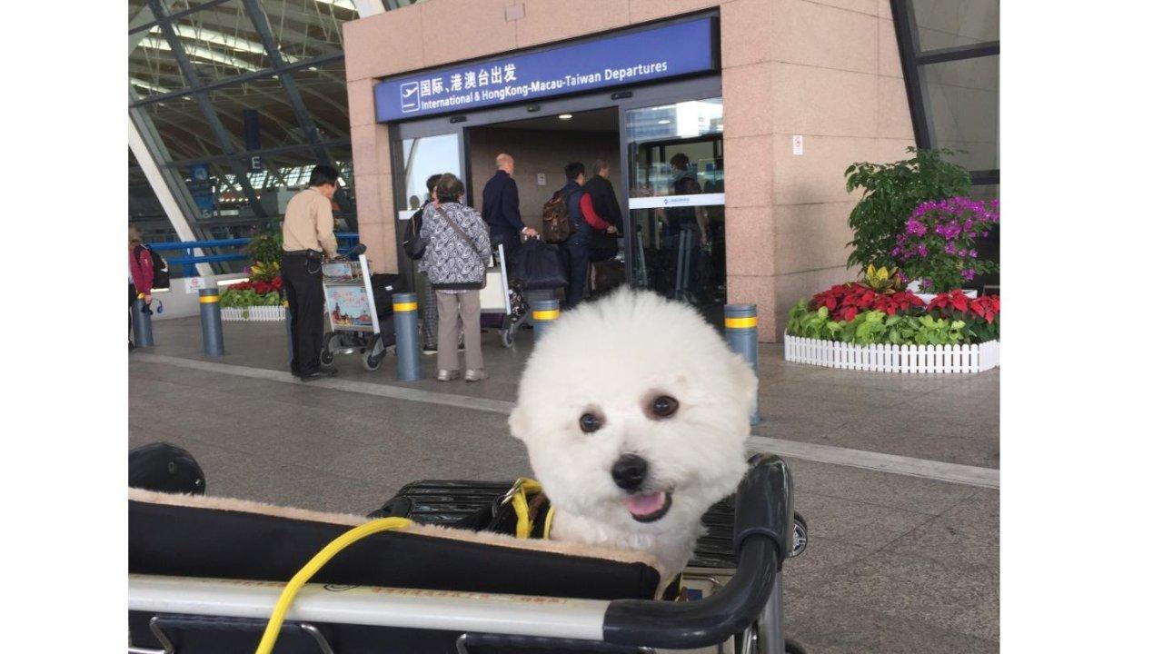 国内带狗狗到美国,全程自助办理,简单省心不被坑