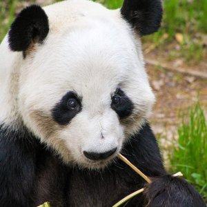 全部免费 每天来治愈一下全美多家动物园和水族馆免费线上直播,在家看各种可爱的动物们