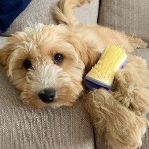 独家7.4折 薄荷绿仅€8.47Tangle Teezer 宠物专用梳毛刷 每天一梳 家里毛发去无踪