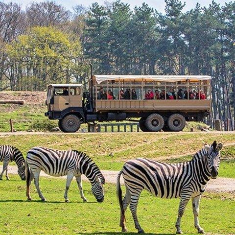 现价€18.90(原价€29)Thoiry Zoo Safari 开车去逛动物园  可以不下车的放松好去处