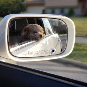 低至4.2折Petco 宠物汽车用品促销 狗子坐车更安全