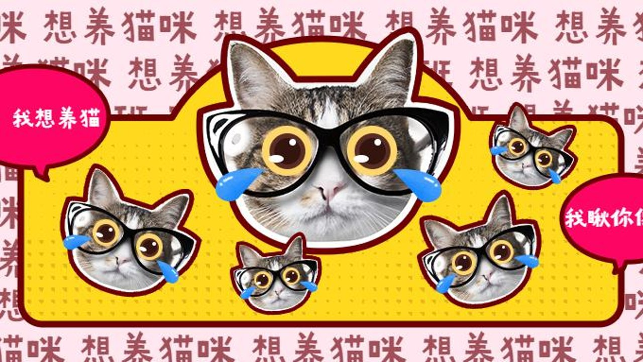 【干货分享】在美帝如何领养猫咪——附领养流程、领养渠道推荐!