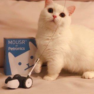 廿廿的新朋友是一只小老鼠|Petronics遥控逗猫棒使用心得报告