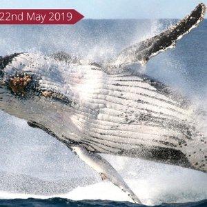 $37(原价$74)Go Whale Watching 观鲸之旅+早\午茶