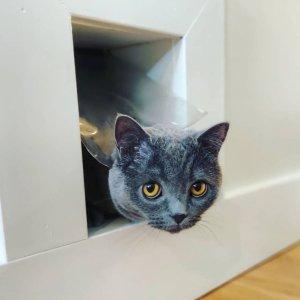 低至5.4折Petco 多款猫咪自由出入门洞促销