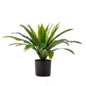 绿植盆栽 55cm