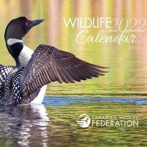 2022年1月1日前收到2022年野生动物月历免费送 加拿大野生动物保护协会太壕了