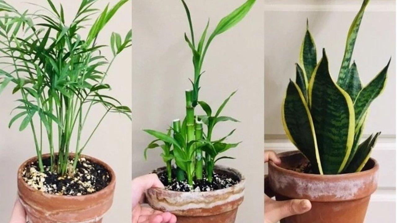让家变成热带雨林   植物杀手也能养活的花草,以及净化室内空气的绿植推荐