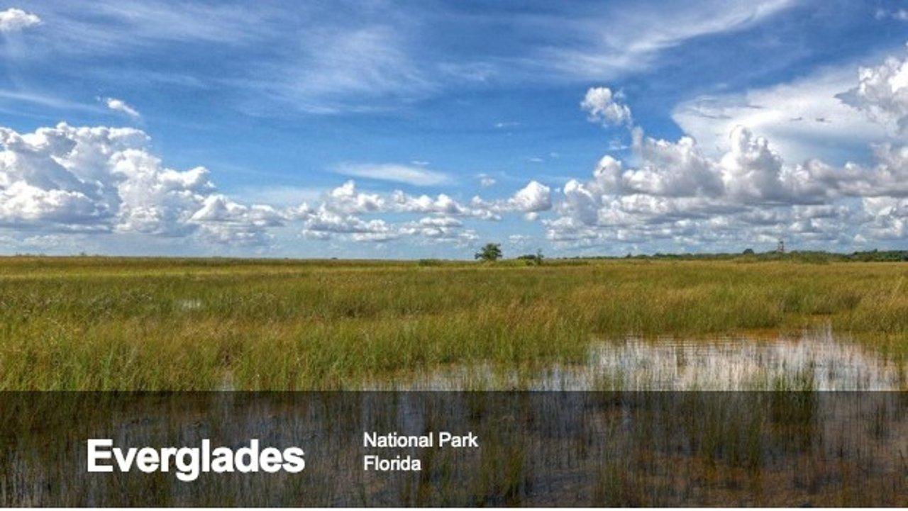 迈阿密旅游攻略 | 大沼泽地国家公园的探险之旅