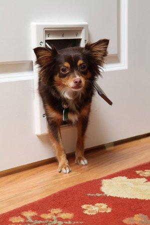 $13.00史低价:PetSafe 带软帘塑料宠物门