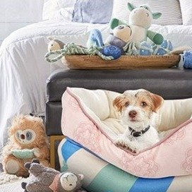 17% off on your order of $80+Dog Toys on Sale as Low as $1.57 @ Petco