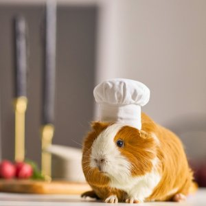 FRISCO Chef Guinea Pig Costume Hat, One Size - Chewy.com