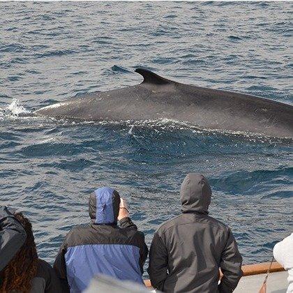 San Diego Whale Watch 2.5小时观鲸游轮 圣地亚哥出发