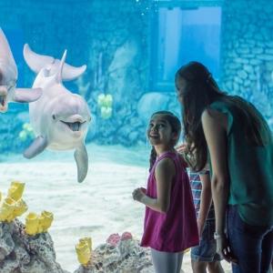 单日票6.5折 仅$50.99起SeaWorld 圣安东尼海洋世界门票特惠