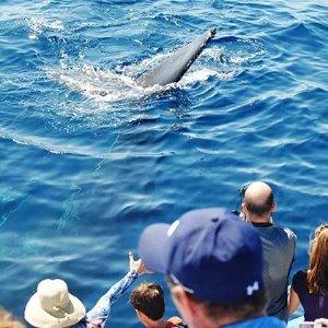 Balboa Peninsula 2.5小时观鲸游轮 纽波特海滩出发