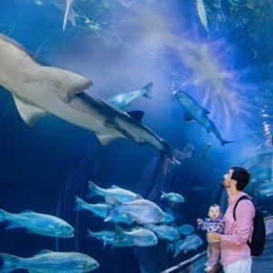 $15.95起旧金山 海湾水族馆门票 Aquarium of the Bay