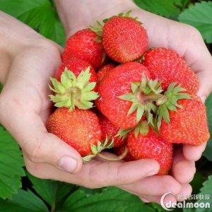 全美采摘攻略桃子蓝莓采摘正当时! 八大城市周边农场攻略来啦, 约起来