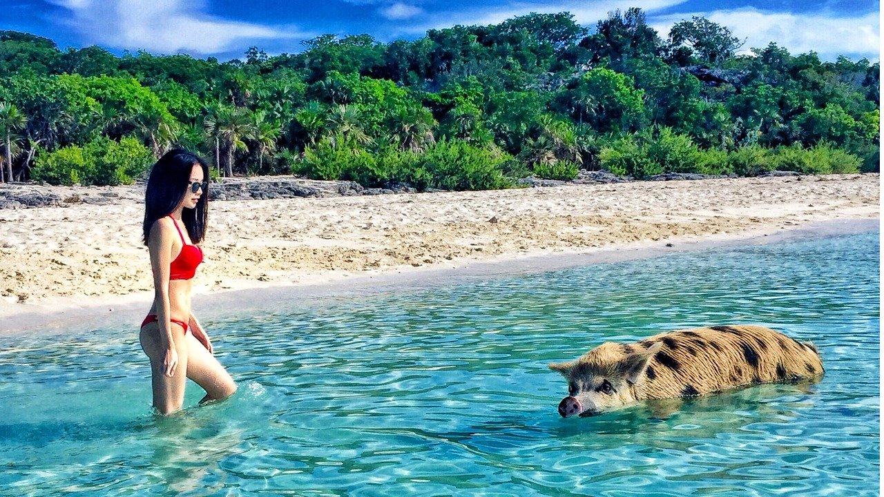 非典型加勒比之旅 | 和小猪游泳, 与鲨鱼共舞, 漫步粉红沙滩, 投食巨型蜥蜴, 那个叫巴哈马的天堂有话要说🌴