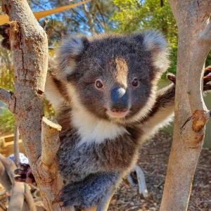 看呆萌小动物生活秀在家逛动物园!Melbourne Zoo动物直播走起