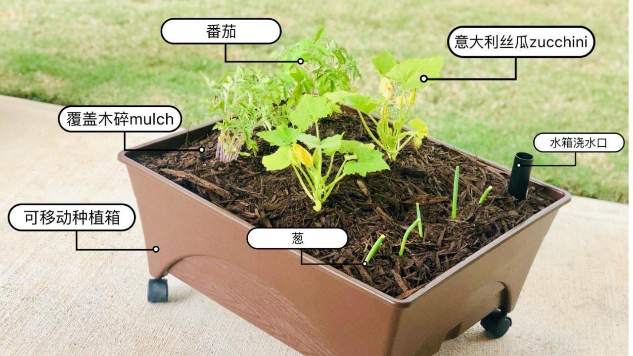 可移动自浇种植箱&免操心种子栽培包:不想挖地除草,没有大院子的新手菜农花农看过来~