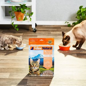 Up To 40 Off Cat Food Black Friday Sale At Chewy Dealmoon