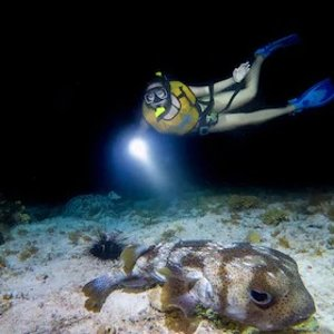 墨西哥坎昆夜间浮潜之旅 小团出行 可预定至明年2月