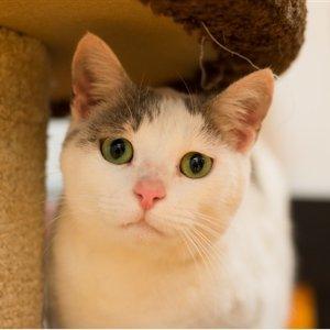 2月23日 - 25日RSPCA 限时领养宠物 优惠价$29