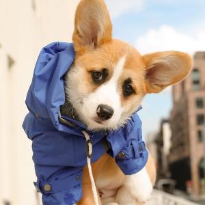 首单9折Max-Bone 奢华时尚宠物服饰、用品、零食等促销