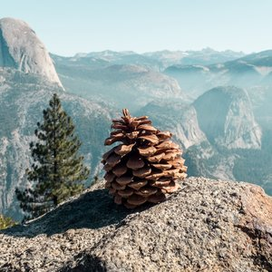 Yosemite Grand Canyon includesFree Entrance Day of National Park in 2019