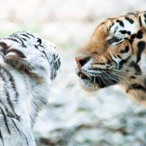 Extra 30% Off, Only $13.29Discount On Admission of Wildlife World Zoo, Aquarium & Safari Park