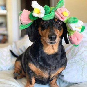 Flower Crown Bungee Dog Toy – BarkShop