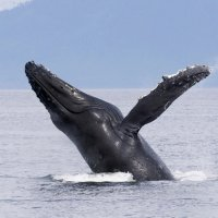 Marina Del Rey 3小时观鲸游轮 玛丽安德尔湾