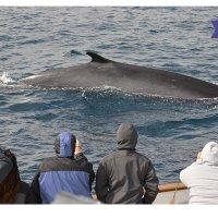 San Diego 3小时观鲸游轮 圣地亚哥出发