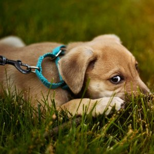 Up to 50% OffGood2Go Selected Dog Collar and Leash on Sale