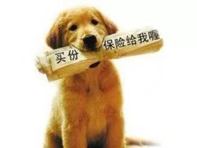 一起养好我们的爱宠,简单聊聊宠物保险