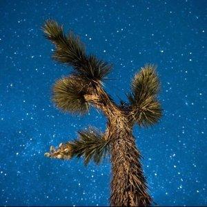 每晚租赁$75起,多车型可选约书亚树国家公园周边房车出租 纯享自然 拍璀璨银河 远离人群