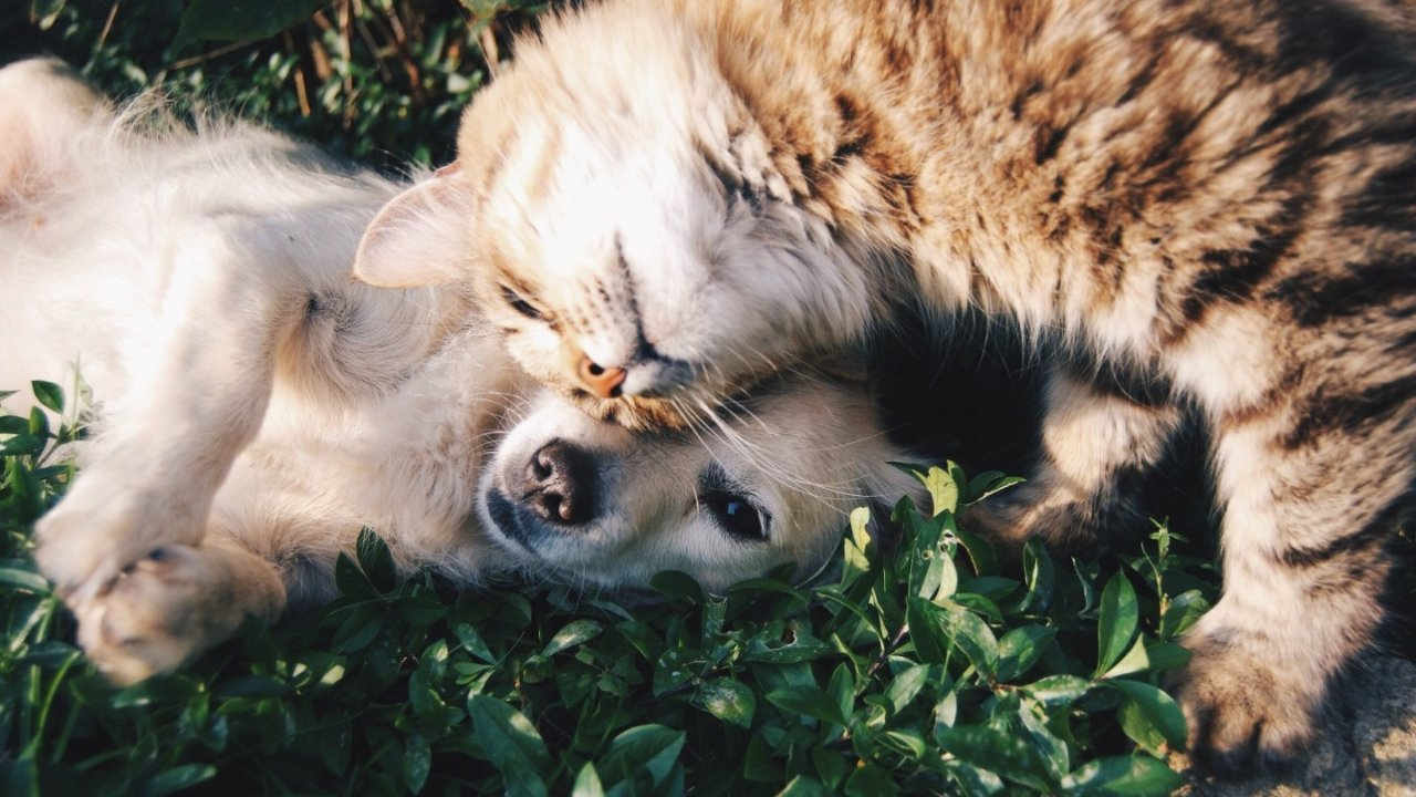法国宠物保险推荐!15家宠物保险价格、保险额度、评价等对比!
