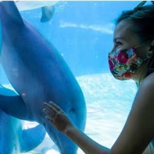 Save up to 32%SeaWorld San Diego Tickets
