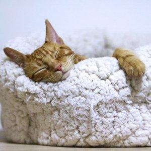 低至6折 + 满$100减$25Petco 精选猫咪床促销