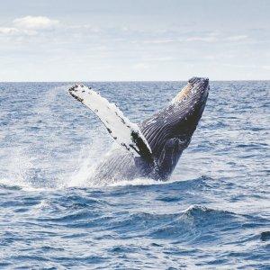 仅$9.5起 美国三大观鲸胜地之一洛杉矶周边观鲸游轮 多游轮公司可选