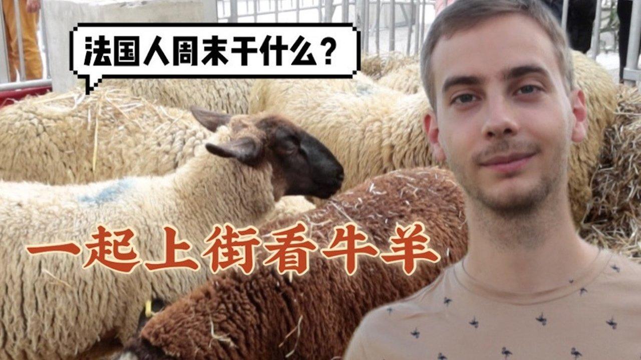 【法国吃喝玩乐】在法国连牛羊也上街游行!法国人周末怎么玩?