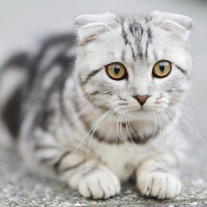 全場8折Chewy 貓咪專屬節日 海量貓糧貓砂等貓咪用品大促