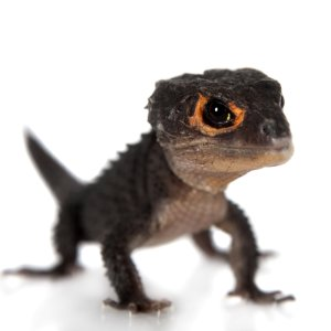 In-Store OnlyPetco Live Reptiles
